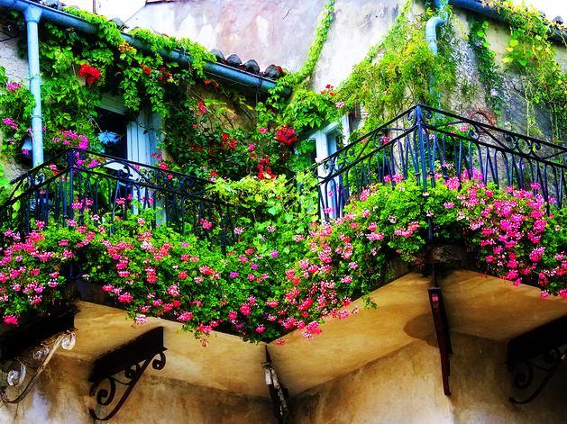 Цветы на перилах балкона